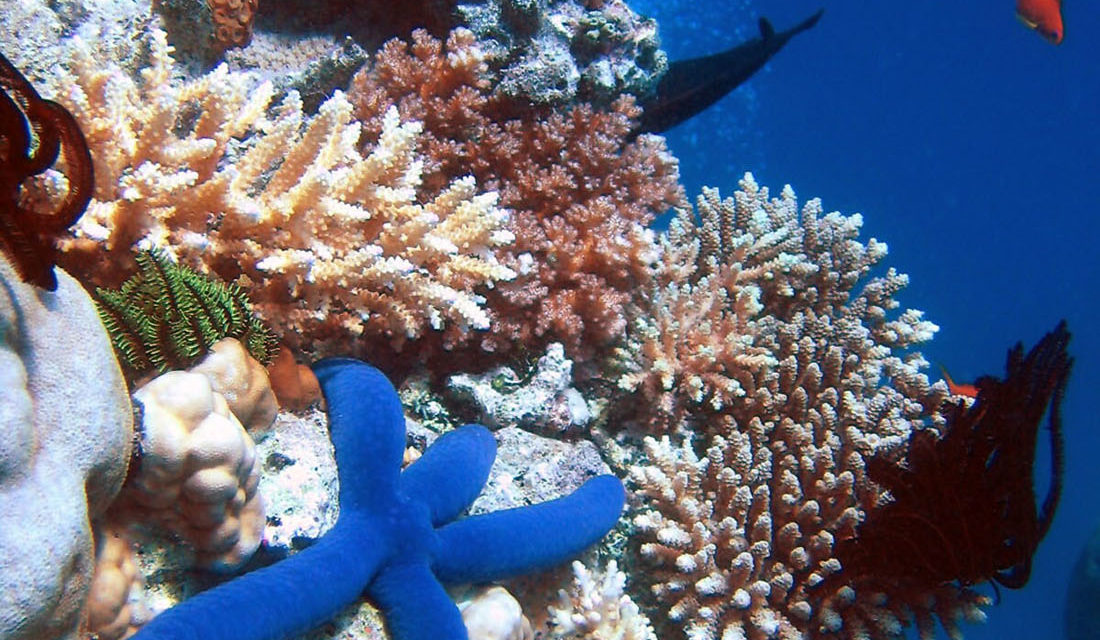 Working to Save the World's Oceans