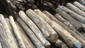 wood_Illegal_rosewood_stockpiles_002-Wikipedia_Carou