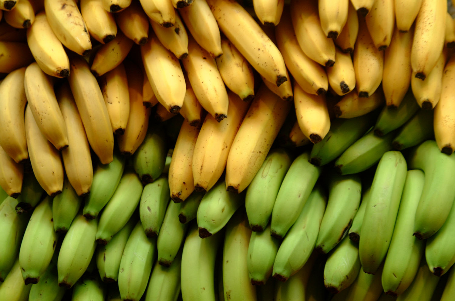 Image result for bannanas