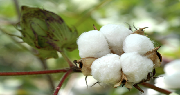 What's So Bad About Cotton?