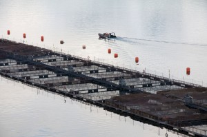 A salmon farming operation in Chile