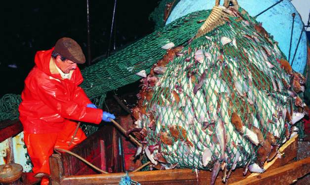 The Campaign to Combat Over-Fishing