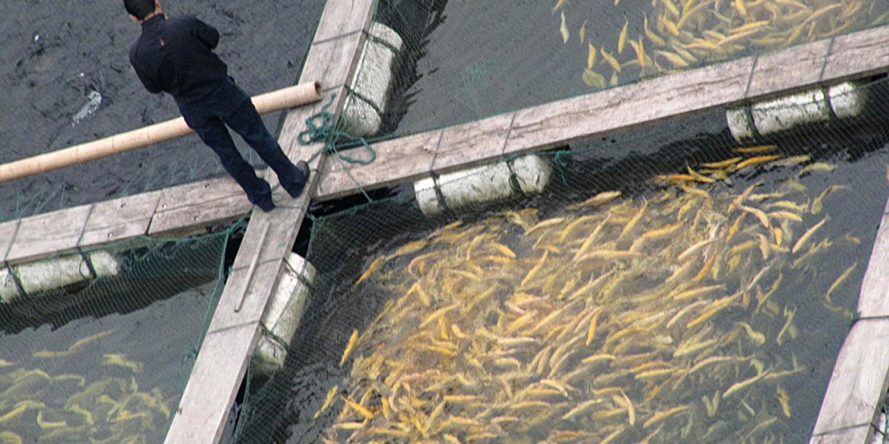 Which farm raised fish should you buy business ethics for Farm raised fish